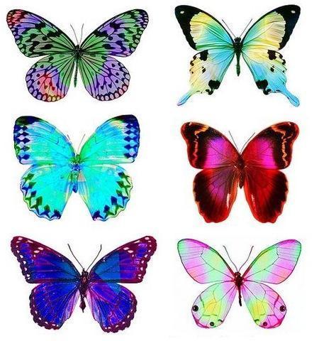 букет из бабочек своими руками - выкройка бумажных бабочек